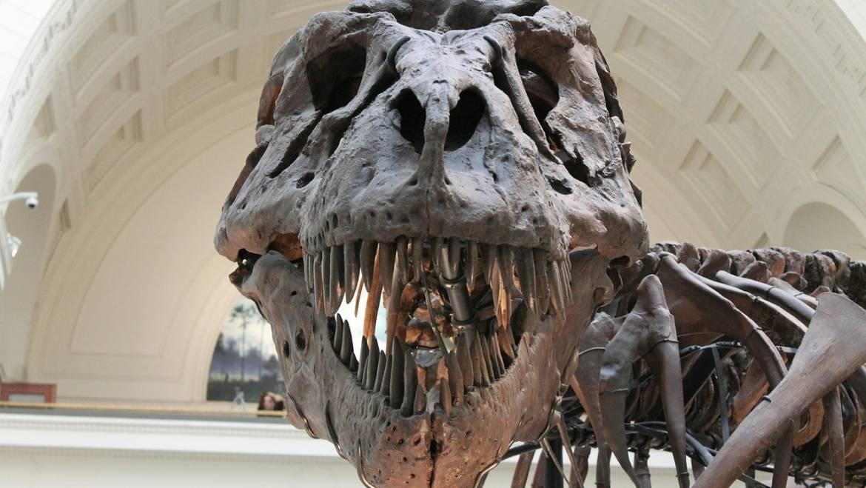 T. rex'in akrabalarını biyoinformatik kullanarak bulmak ister misiniz ?